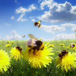 pollinating bees in a field