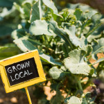 food grown locally