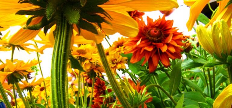 flower garden colors close up