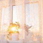 houseplant window lace curtain sunshine