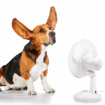 dog cooling off with fan