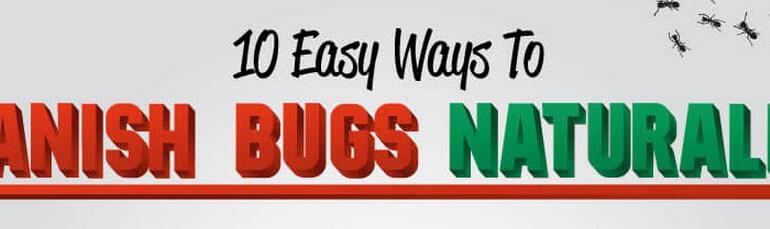 10 ways banish insects thumb