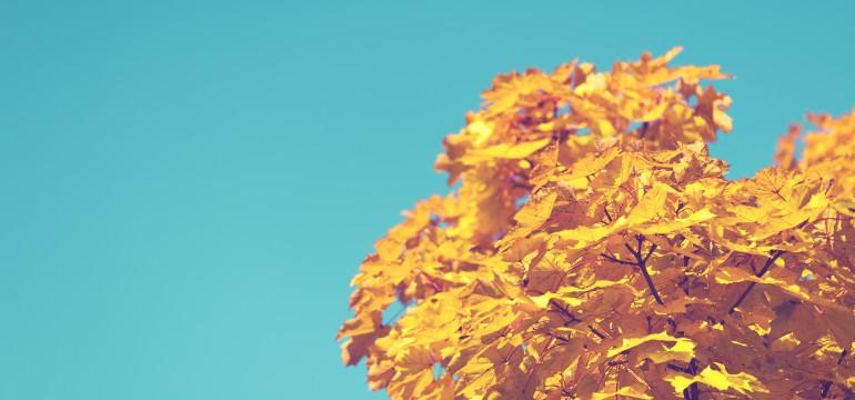 fall foliage autumn