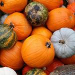 pumpkin time color palette