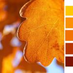 golden light color palette