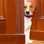 curious dog