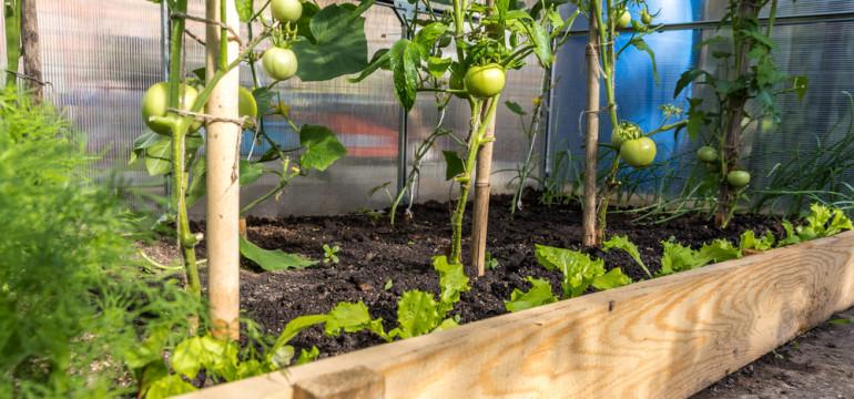 greenhouse tomato garden