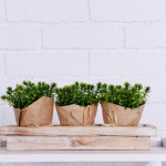 stylish flower pots