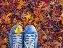 autumn leaves hipster sneakers