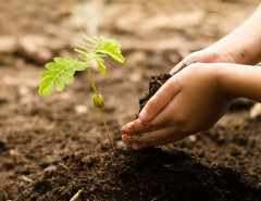 kids planting garden