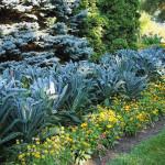 edible landscaping kale