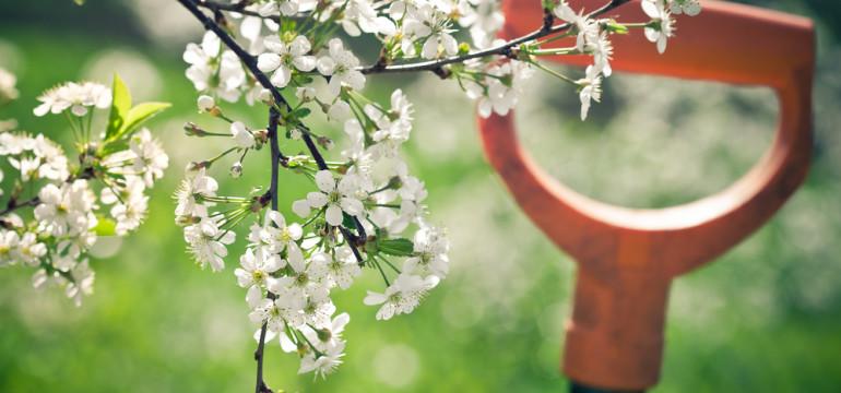 gardening in spring spade handle cherry blossom