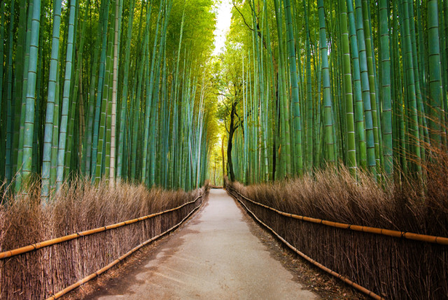 bamboo forest gate