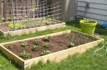 Backyard Garden Boxes
