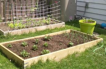 Backyard Garden Box. Backyard Garden Boxes Box O