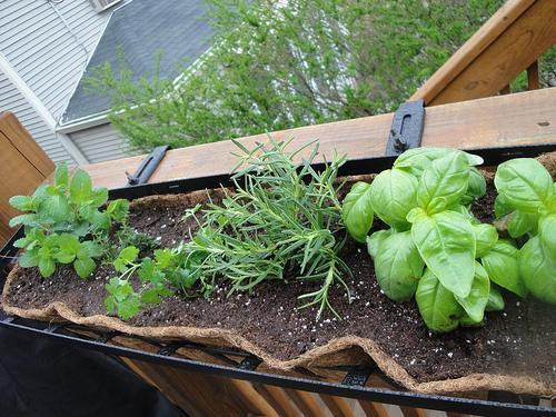 Good Herb Garden In A Window Box