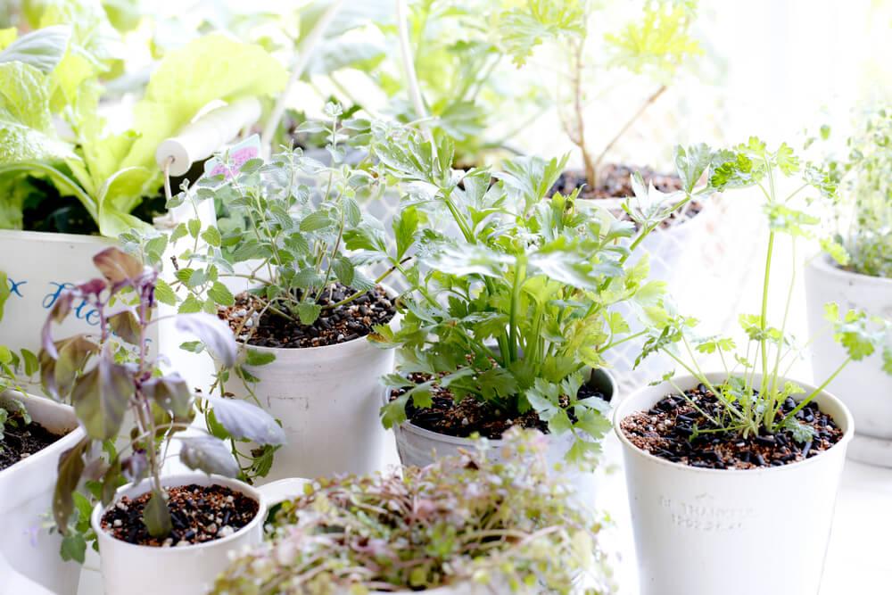 tags indoor winter garden - photo #15