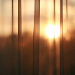 sun through curtains window