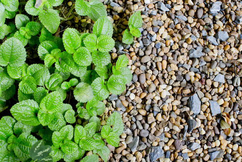 leaves and gravel ground cover