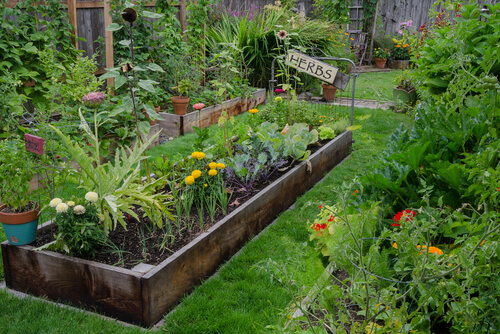 Grow Some Green Thumbs 5 Gardening Hacks To Consider