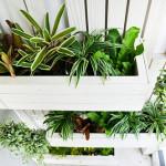 vertical garden topview