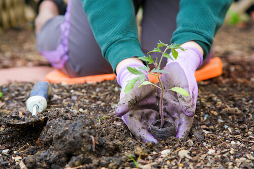 garden gardening gloves spade soil