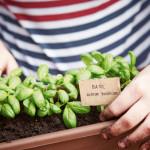herb garden tending