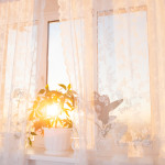houseplant window lace curtain sunshine