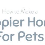how to make you home happy for pets thumb