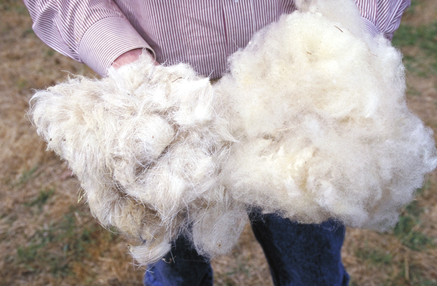 sheared sheeps wool