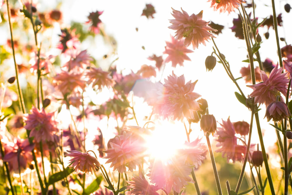 Gardens and gardening tips for late summer early fall - What does it mean to be a master gardener ...