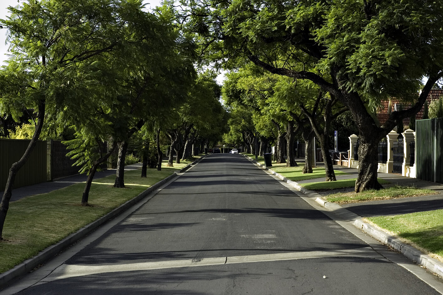 Tree Happy An Argument For Tree Lined Streets
