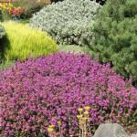 rock garden drought resistant plants