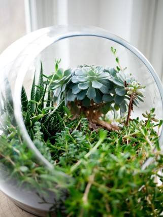 container plants houseplants terrarium