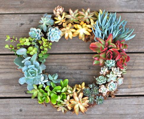 succulents wreathe