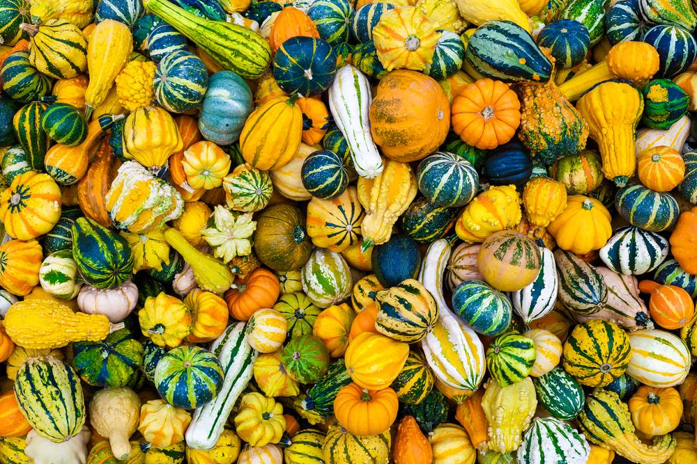 Decorative Gourds Post Halloween Decor Preservation Tips