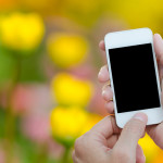 smartphone in the garden yellow flowers