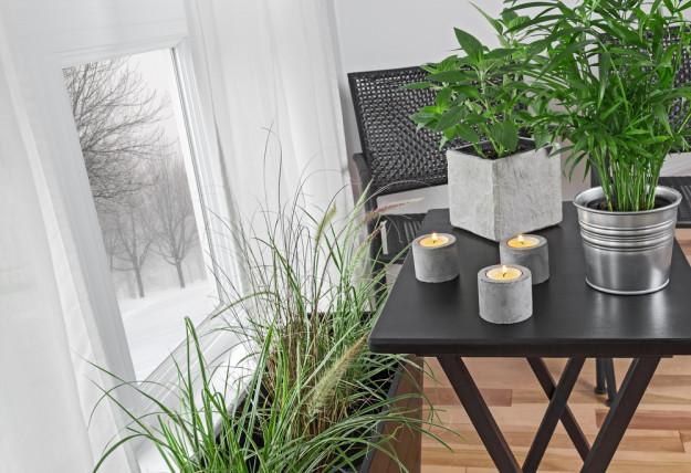 houseplants in winter