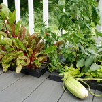 wellspring-dropin-deck-planter-veggies