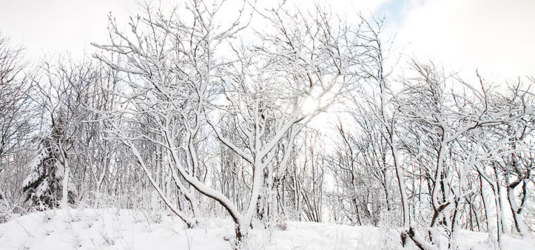 9220-snow-covered-trees-in-winter-pv