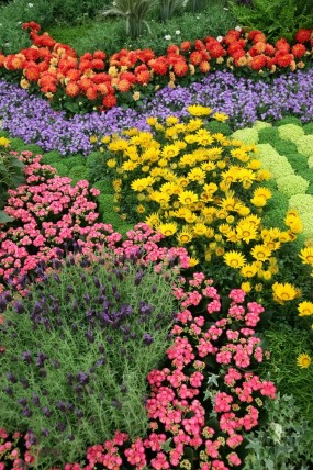 colorful flower garden layout