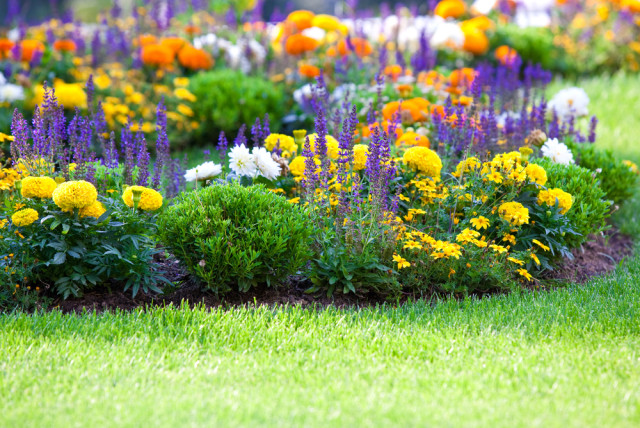 complementary colors flower bed