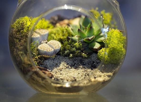 terrarium plants decor