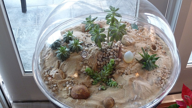 terrarium by window