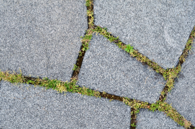 natural stone pavers and moss
