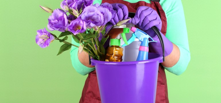 spring cleaning violets in a bucket