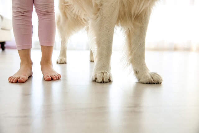 feet and paws on floor