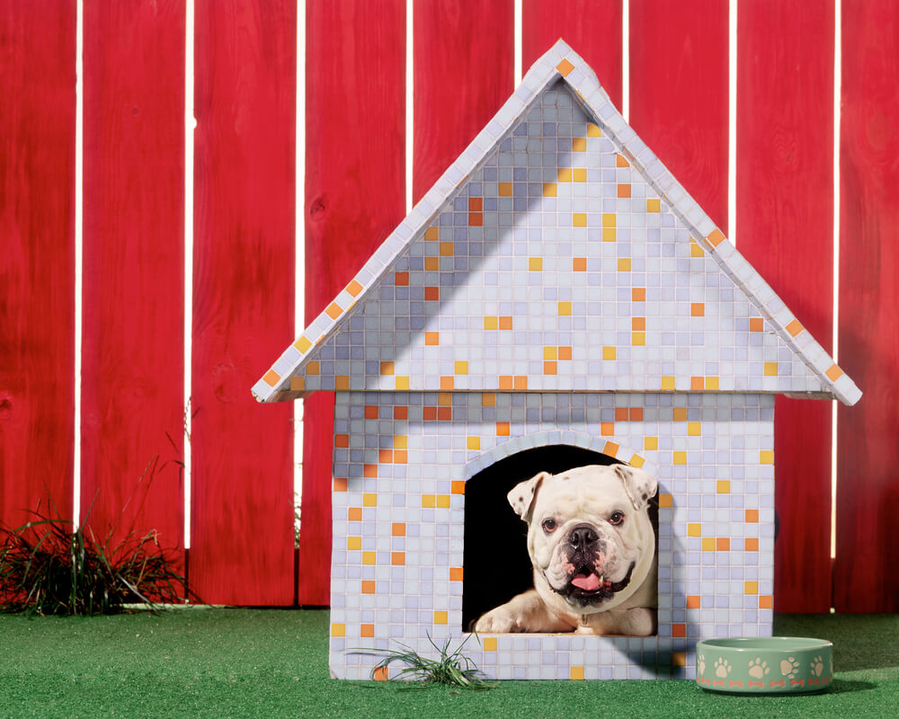 Six Things to Consider When Your About To Build an Outdoor Dog ...