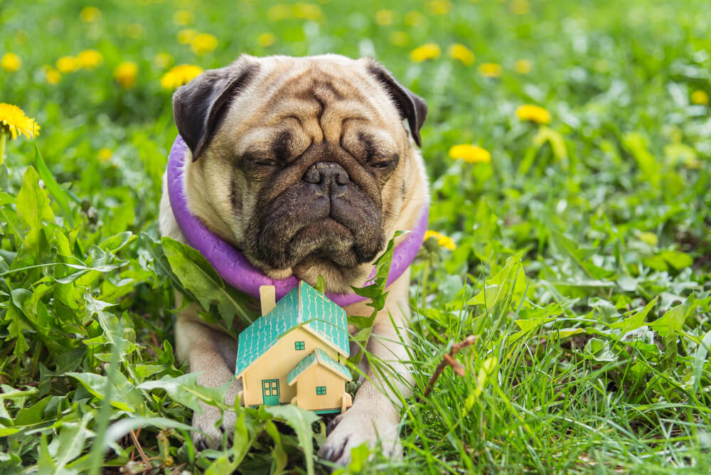 6 things to consider before building a dog house for Things to consider before building a house