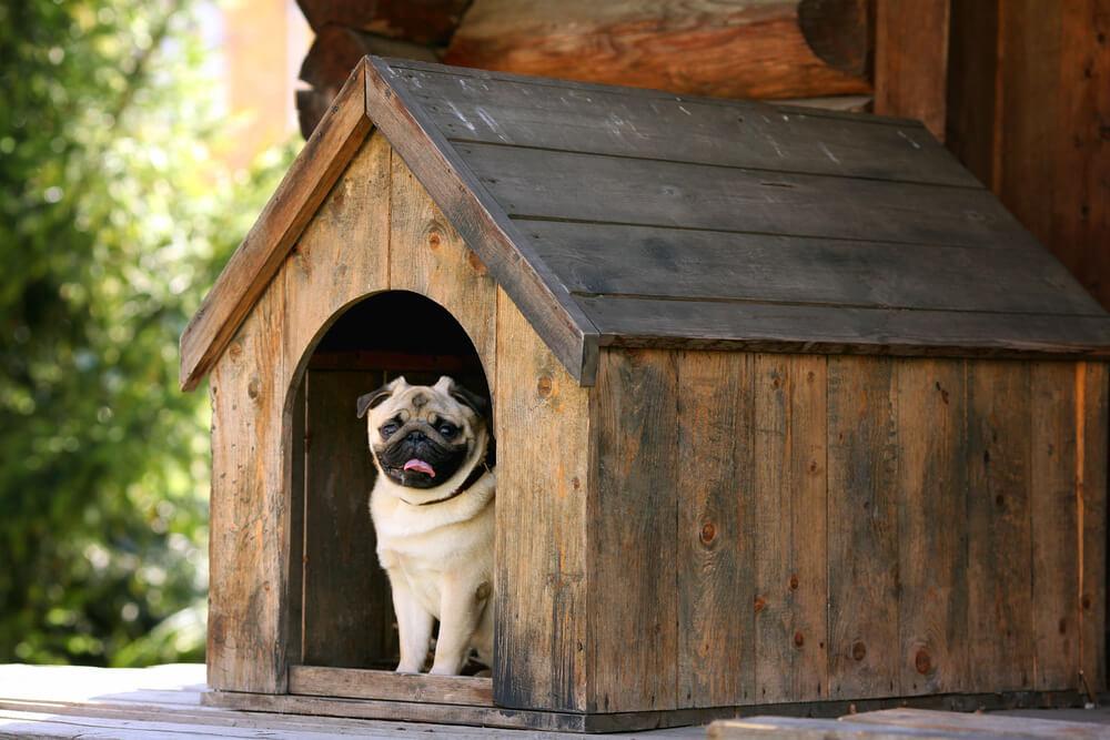 build an outdoor dog house